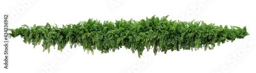 Billede på lærred Green leaves tropical foliage plant bush of cascading Fishtail fern or forked giant sword fern (Nephrolepis spp