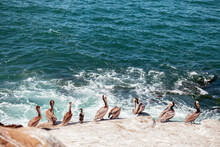 High Angle View Of Pelicans On Beach