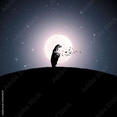 Stampa su Tela Polar bear on moonlight night