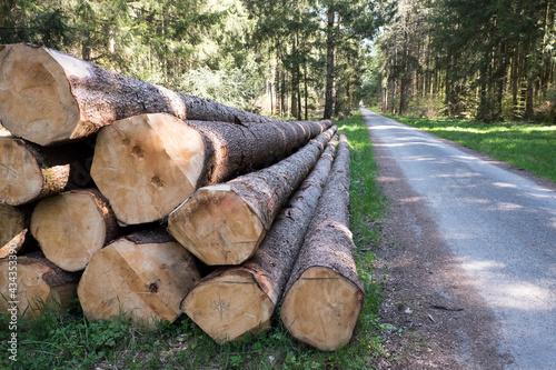 Photo Holzstoß Stapel mit Fichtenstämmen im Wald / Forst