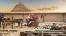 Camel On The Background Of The Great Pyramid Of Giza. Colorful, Exotic Landscape With A Pyramid And A Camel. Travel To Egypt, Cairo. Camel Ride Caravan