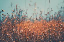 Dry Wildflowers Field