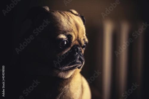 Close-up Of A Dog Fototapeta