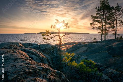 Fototapeta Pines On The Cliffs Cold dawn on Ladoga