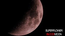 Super Flower Blood Moon Close Up Photo And Text