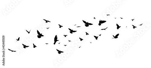 Tableau sur Toile A flock of flying birds. Vector illustration