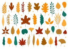 Autumn Leaves. Oak, Maple, Elm Dry Fallen Leaf. Hand Drawn Fall Forest Yellow Or Red Foliage. Dried Plant Leaves, Autumnal Falling Leaf Vector Set, Seasonal Herbarium, Tree Branches