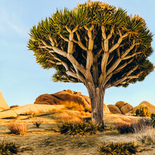 Large Dichotoma Tree In The Desert.
