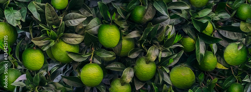 Background of ripe lime fruits on tree branches.