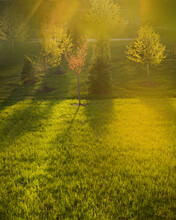 Green Grass And Trees And Sun Streaming Through It