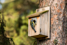 Close-up Of Birdhouse On Wall