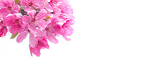 Dark Pink Cherry Blossom Flowers