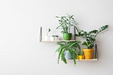 Modern Shelves With Houseplants Hanging On Light Wall