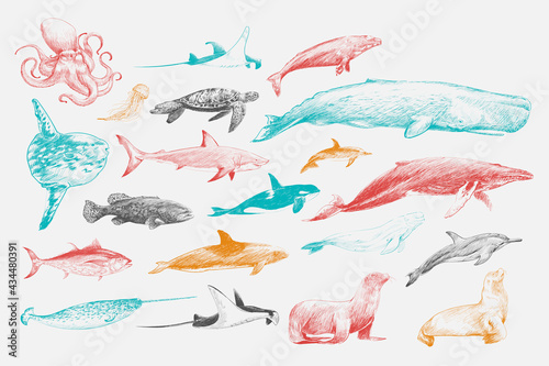 Canvas Print Illustration drawing style of marine life collection