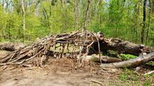Baumhöhle Im Wald