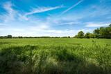 Rural landscape with a green wheat fields in springtime, Padan Plain or Po valley (Pianura Padana, Italian). Mantua province, Lombardy, Italy, southern Europe.