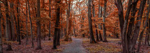Panorama Of A Red Colored Forest In Autumn