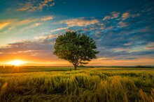 Wide Angle Shot Of A Single Tree Growing Under A Clouded Sky During A Sunset Surrounded By Grass