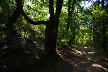 Lungo Il Sentiero Del Granchio Nero Nelle Marche
