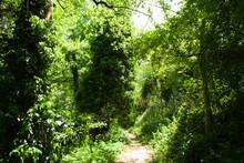 Lungo Il Sentiero Del Granchio Nero Nelle Marche In Italia