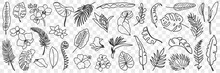 Natural Leaves Pattern Doodle Set. Collection Of Hand Drawn Various Natural Leaf Wallpaper Patterns Blooming Flowers And Grass Isolated On Transparent Background