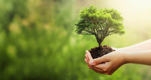 Hand Holding Tree Blur Green Nature