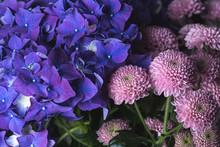 Pink Dahlias Flowers And Purple Hydrangea Flower Bouquet On A Black Background