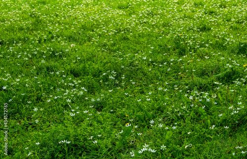 Canvas green grass background