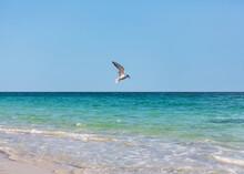 Sea Gull Flying Sea