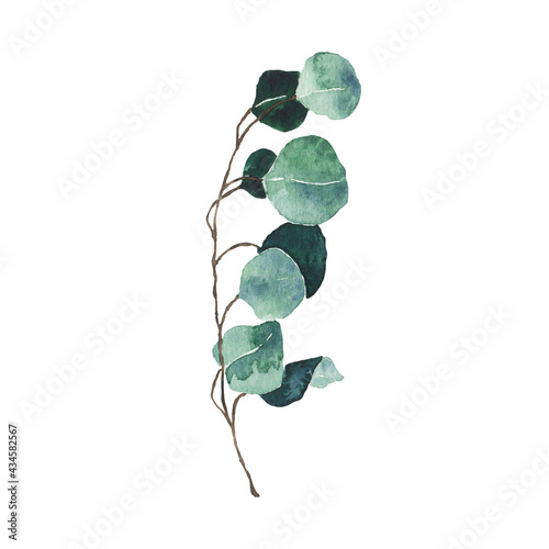 Fotografiet Watercolor eucalyptus green leaf isolated on white background