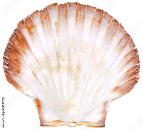 Foto beautiful isolated marine shell on white background
