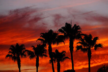 A Silhouette Of Palm Trees During An Orange Sunset