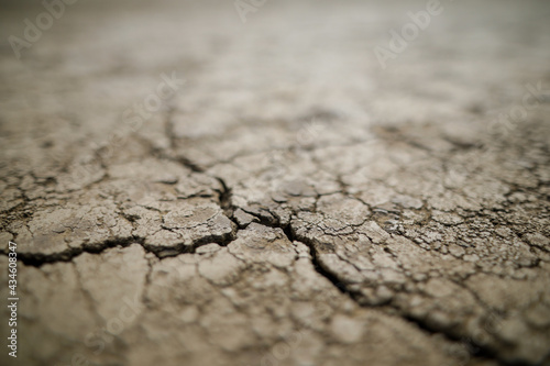 Papel de parede Shallow depth of field (selective focus) details with scorched earth under the strong sun of a summer day - drought
