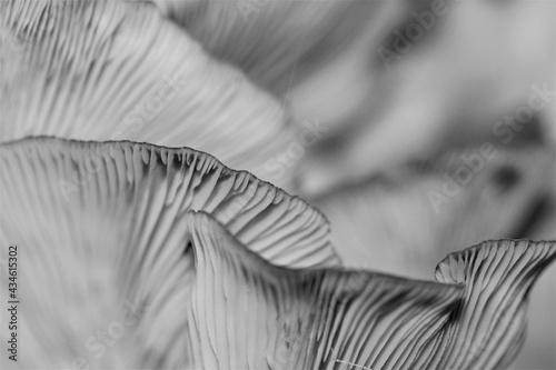 Fotografia Fungal Beauty