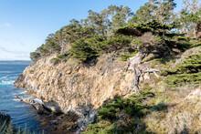 Tree Growing Off Of Cliffside In Big Sur, California