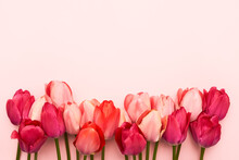 Border Of Bright Pink And Red Tulips On A Pink Background. Mothers Day, Valentines Day, Birthday Celebration Concept