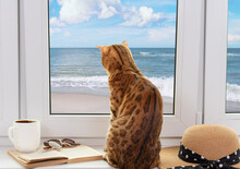 Bengal Cat Looks At The Beach And The Sea Through The Window