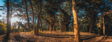 Panoramic View At The Top Of Hill Of Beautiful Forest On A Bright Sunny Day, Surrounded By Tall Trees Shaping Long Shadows