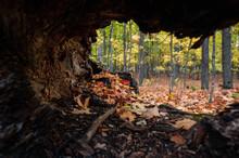 Autumn Leaves Inside A Fallen Hollowed Tree.