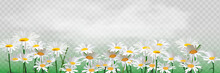 Bouquet Realistic Daisy, Camomile Flowers. Seasonal Sales