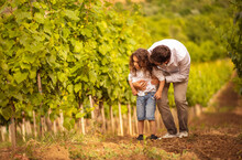 Father And Son In The Vineyard. Father Talking His Son About Agriculture.