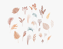 Plants, Dry Palm Leaf, Flowers And Branches Collection