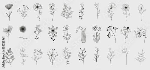 Obraz na plátně Bundle of detailed botanical drawings of blooming wild flowers