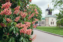 Red Chestnut Flowers Against The Background Of The Of The Church Chestnut A Symbol Of Kiev.  Postcard