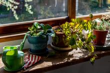 部屋の窓辺に飾ってある観葉植物 インテリア