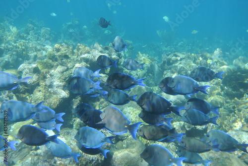 Foto Galapagos