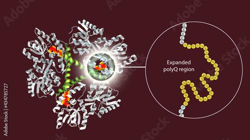 Fotografie, Obraz Molecule of the mutant Huntingtin protein, mHtt, the cause of Huntington's disea