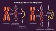 Molecular Genesis Of Huntington's Disease, 3D Illustration