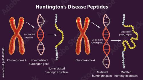 Fotografia Molecular genesis of Huntington's disease, 3D illustration