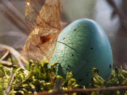 Fototapeta Lost thrush egg in the skeleton leaf shadow